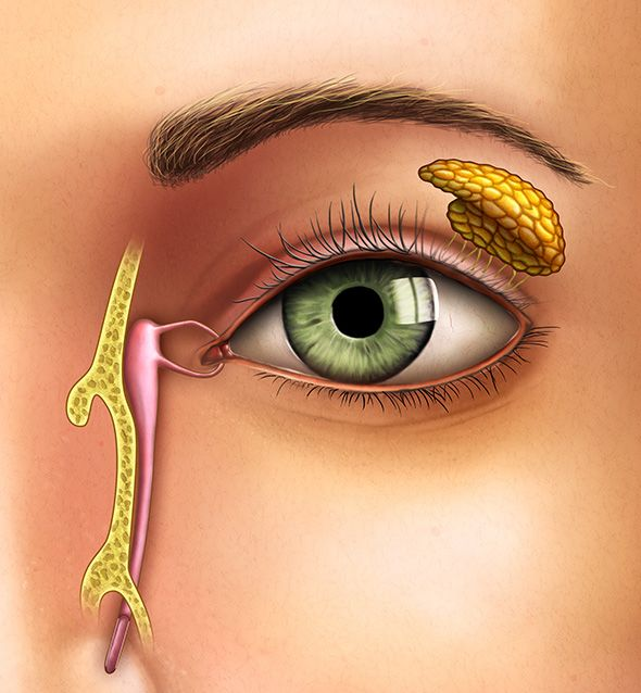 Prise en charge de la pathologie des paupières et des voies lacrymales à Paris 5 au Centre ophtalmologique COSS